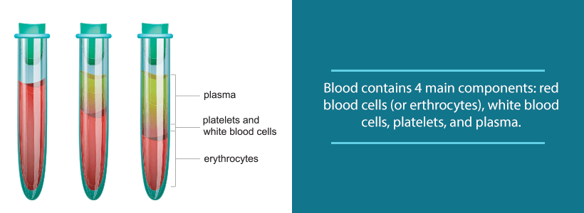 the 4 components of blood
